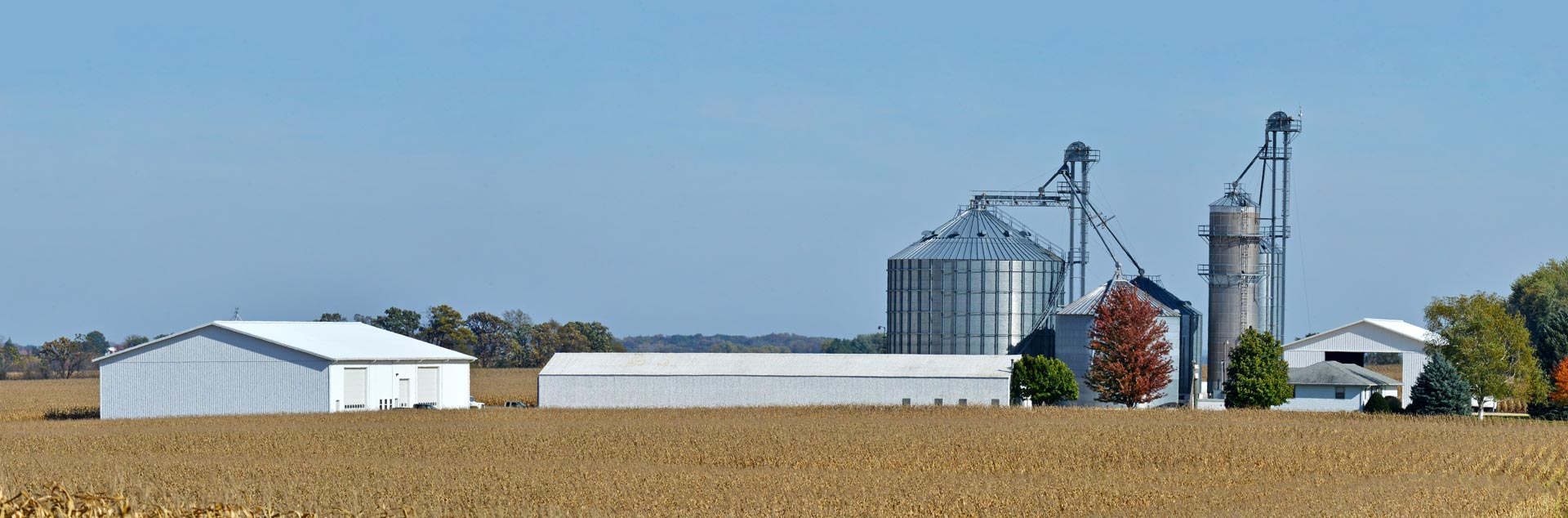 corn field with farm and grain bins in the distance
