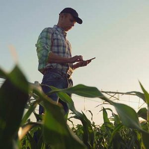 Farmer on his tablet in a corn field